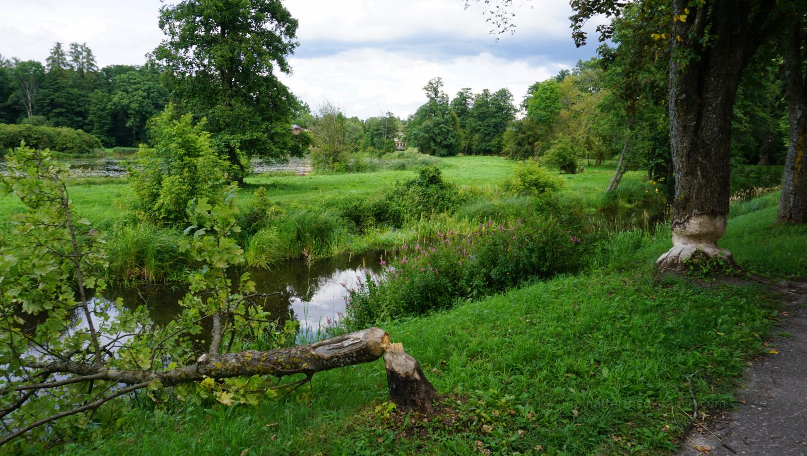 Bialowieza - Park Palacowy 2