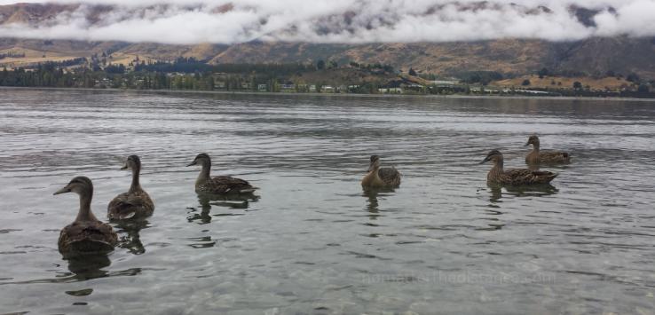 Nowa Zelandia 2017 – Queenstown i Wanaka 24