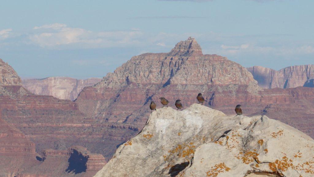 Odwiedziny Kanionu Antelope oraz Horseshoe Bend 13
