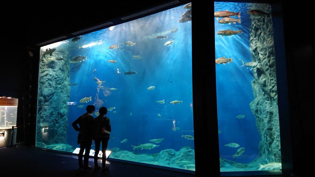 Akwarium w Sapporo - Chitose