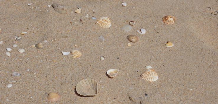 Muszelki na plaży w Faro
